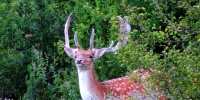 wildlife_2_4