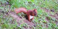 wildlife_5
